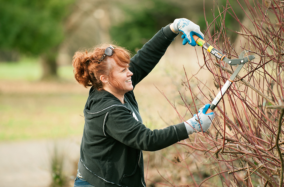 Woman clipping branches