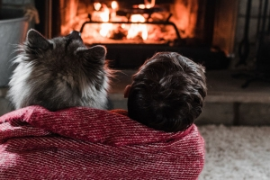 Seven tips to keep your heating bill down this winter